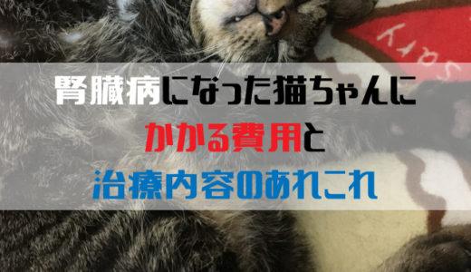 猫ちゃんの腎臓病の治療にかかる費用と治療内容のあれこれ