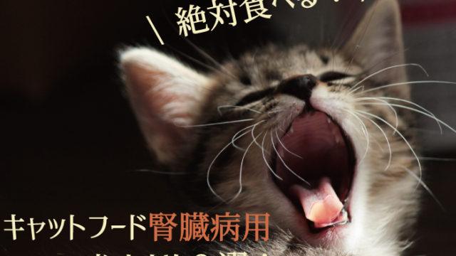 【絶対食べる!】キャットフード腎臓病用おすすめ3選!